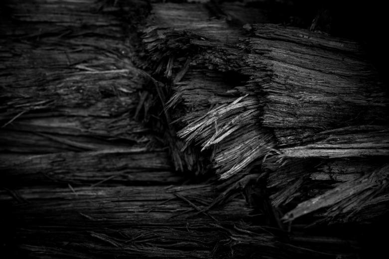 Free Stock Photo of Burned Wood Texture Created by Free Texture Friday