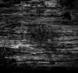 Free Photo - Burned Wood Texture