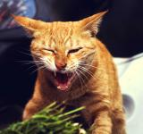 Free Photo - Angry Cat