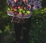 Free Photo - Basket full of apples