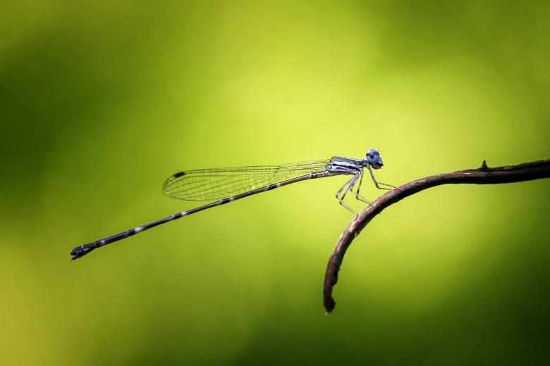 Free Stock Photo of Damselfly Created by Pixabay