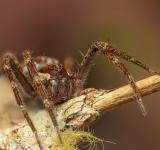 Free Photo - Brown Spider