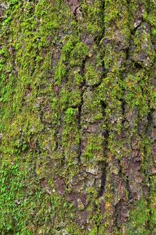 Tree Moss - HDR Texture - Free Stock Photo