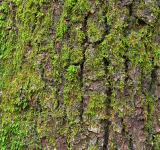 Free Photo - Tree Moss - HDR Texture