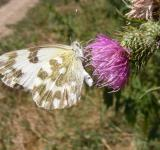 Free Photo - White Butterfly