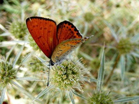 Orange Colored Butterfly - Free Stock Photo