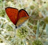 Free Photo - Orange Colored Butterfly