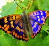 Free Photo - Colorful Butterfly