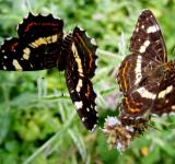 Free Photo - Wild Butterflies