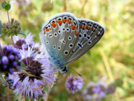 Silver Butterfly - Free Stock Photo