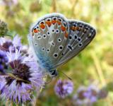 Free Photo - Silver Butterfly