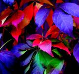 Free Photo - Colorful Leaves