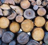 Free Photo - Pile of wood logs