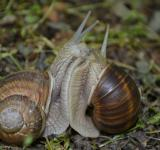 Free Photo - Two Snails