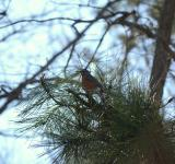 Free Photo - Bird in tree