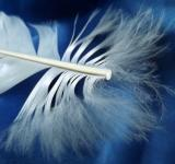 Free Photo - Feather