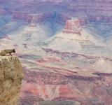 Free Photo - Grand Canyon Squirrel View