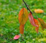 Free Photo - Autumn