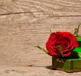 Free Photo - Rose in the Box