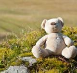 Free Photo - Teddy