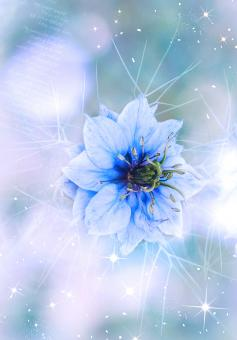 Blue Flower - Free Stock Photo