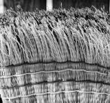 Free Photo - Broom