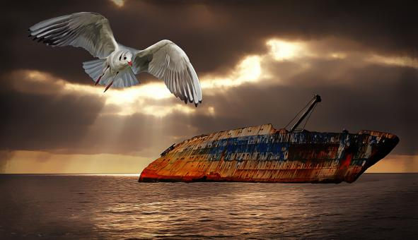 Bird and old ship wreck - Free Stock Photo
