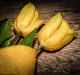 Free Photo - Yellow