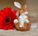Free Photo - Flower n Rabbit