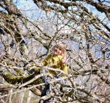 Free Photo - Girl on the Tree
