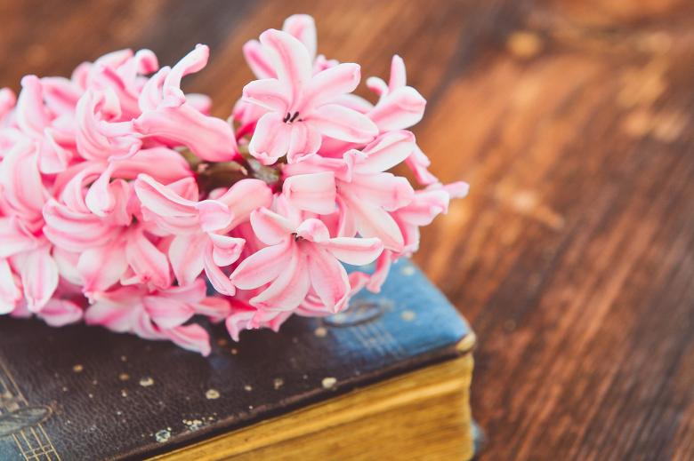 Free Stock Photo of Flowers on the Book