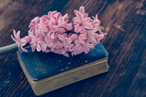 Flower n Book - Free Stock Photo