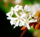 Free Photo - White Flowers