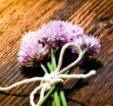 Free Photo - Chives