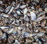Free Photo - Old Sea Shells Texture