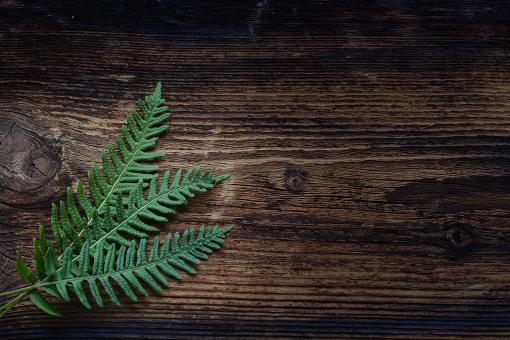 Fern - Free Stock Photo
