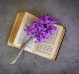 Free Photo - Flowers n Book