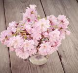 Free Photo - Cherry Blossoms