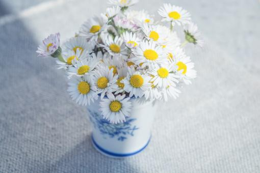 White Fresh Flowers - Free Stock Photo