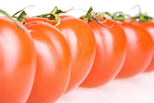 Row of Tomatoes - Free Stock Photo