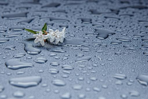 Rain Drops - Free Stock Photo