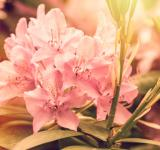 Free Photo - Blooming