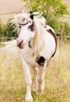 White Horse - Free Stock Photo