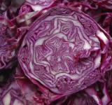 Free Photo - Cabbage