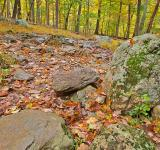 Free Photo - Catoctin Mountain Trail - HDR