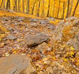 Free Photo - Catoctin Mountain Trail - Gold Fantasy HDR