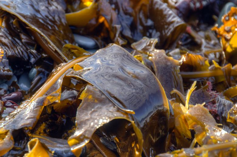 Free Stock Photo of Seaweed Created by Geoffrey Whiteway