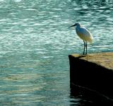 Free Photo - White Bird