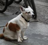Free Photo - White Dog
