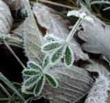 Free Photo - Frost
